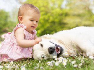 отдых с собакой в Крыму